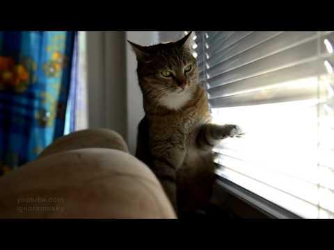 Jokes - Cat Needs Some Entertainment
