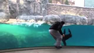 Guy Becomes Best Buds With A Sea Lion