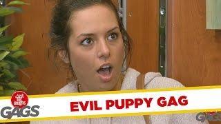 Dangerous Puppy Bites Off Finger Prank
