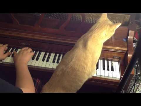 Jokes - Cat Plays The Piano