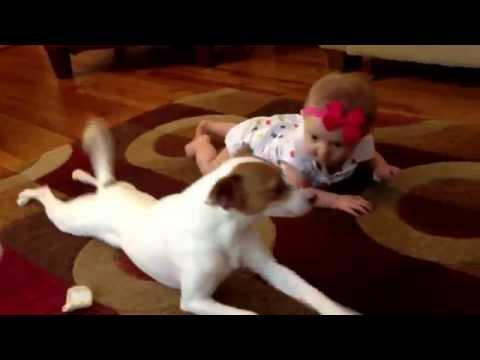Dog Teaches Baby How To Crawl