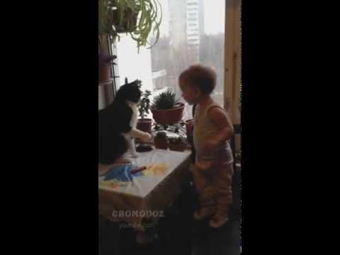 Cute - Cat Fights With The Baby