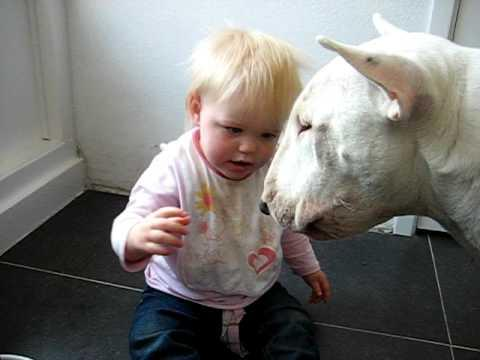 Cute - Baby Girl Feeds The Dog