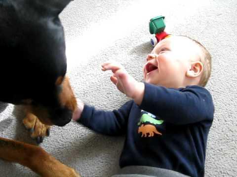 Cute - Dog Makes Baby Laugh