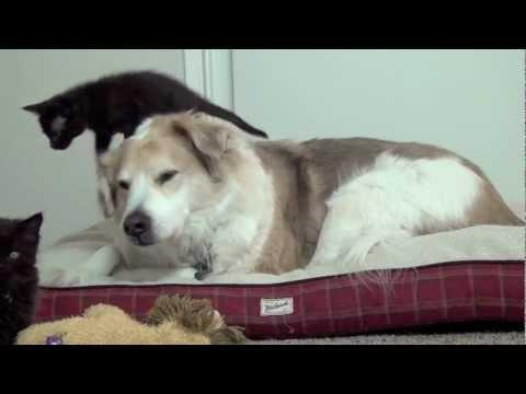 Cute - Playful Kittens Vs The Dog
