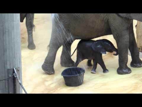 Cute And Adorable Baby Elephant
