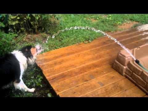 Jokes - Dog Attacks Garden Hose