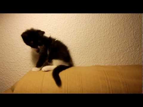 FAIL - Kitten Tail Attack FAIL