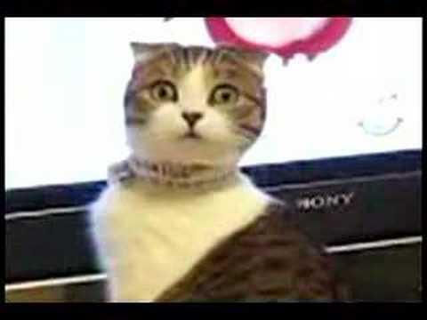 Jokes - Cat Watching TV Turns Around And Gives The Dramatic Look