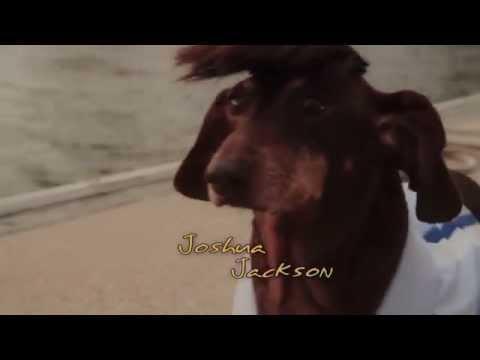 Dawson's Creek TV Show Parody Starring Dachshund Dogs