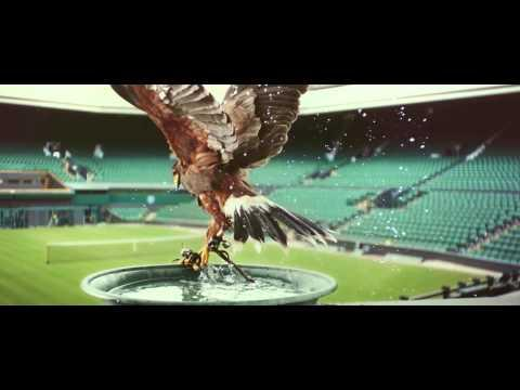 Hawk Protects Wimbledon From Unwanted Visitors