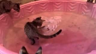 Cats Learn To Catch Fish