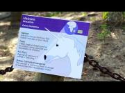 Male Unicorn Is A VIP At The Zoo