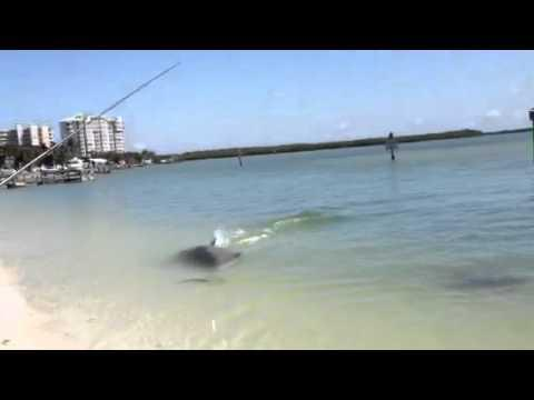 Awesome - Dolphin Catches Fish