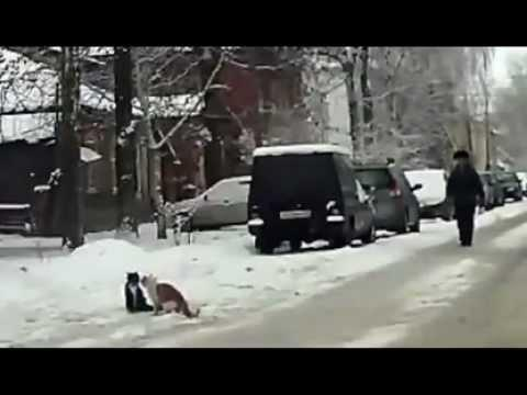 Jokes - Cats Block The Road And Fight