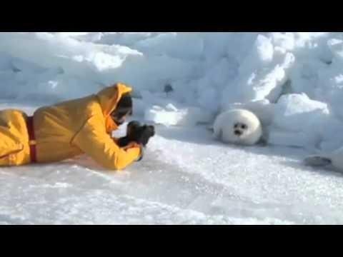 Jokes - Cute Seal Has No Job