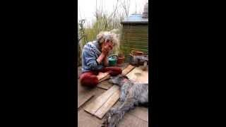 Guy Plays The Harmonica And Dog Sings The Blues