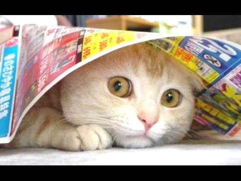 Funny Compilation Of Scaredy Cats