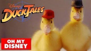 DuckTales Theme Song Recreated Using Cute Ducks