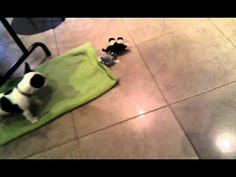 Jokes - Puppy Gets Scared Of Toy Mouse
