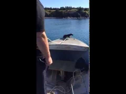 Otter Goes For A Ride On The Boat