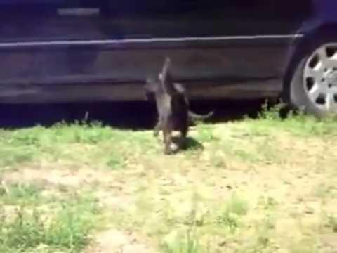 Jokes - Dogs Break Up The Cat Fight