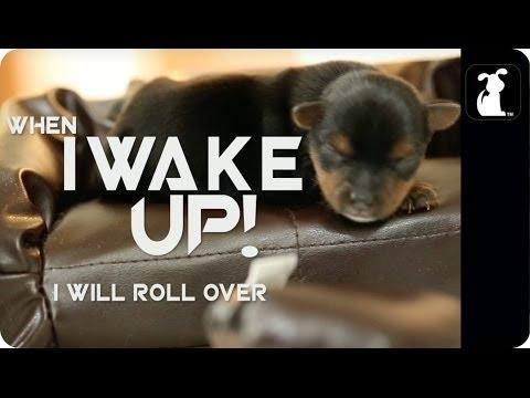 Avicii's Wake Me Up Song Parody Starring Cute Dogs