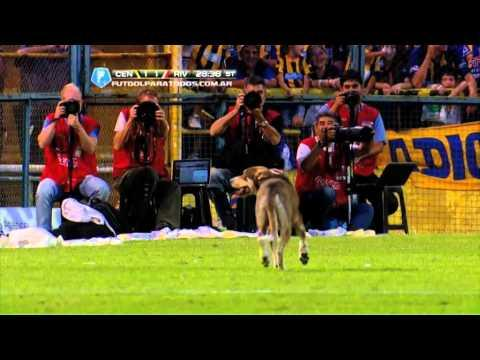 Dog Crashes The Soccer Game In Argentina