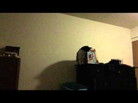 Cat Trying To Jump From The Dresser Fail