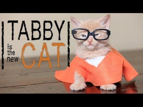 Orange Is The New Black Cute Kittens Parody