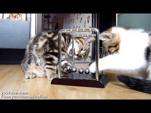 Cute - Kittens And Physics