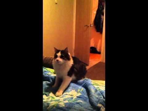 WIN - Cat Does A Back Flip