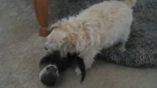 Cute Otter Plays With A Toy