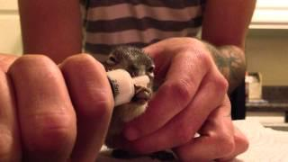 Bottle Feeding A Baby Squirrel