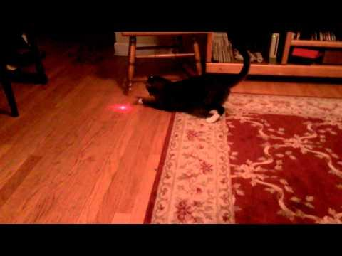 How To Keep Your Cat Active Using A Laser Pointer