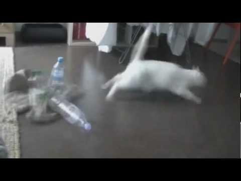 FAIL - Bottles Vs Cat