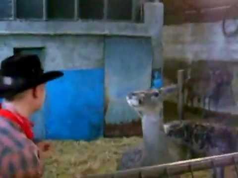 FAIL - Man Vs The Deer FAIL