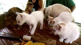 Kittens Eating Chips With Baby Monkey