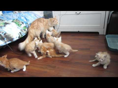 Kittens Hide After Mother Cat's FAIL