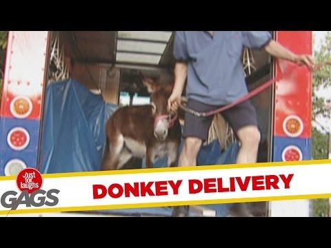 Donkey Delivered To Home Prank