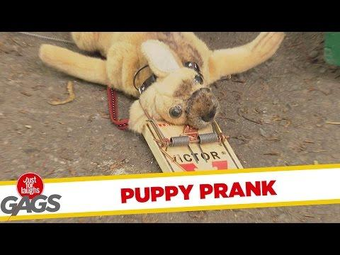 Puppy Killed By Mouse Trap Prank