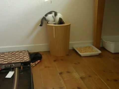 FAIL - Curious Cat Checks Out The Trashcan