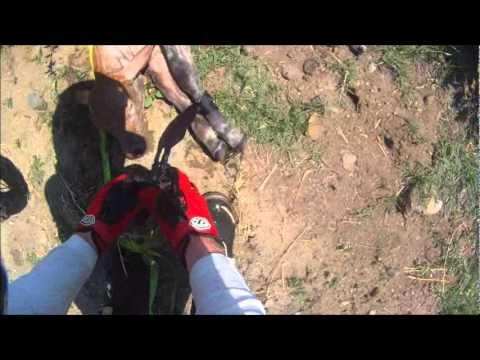 Amazing - Biker Saves A Calf