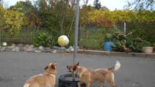 Dogs Love To Play Tetherball