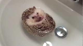 Cute Floating Hedgehog