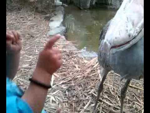 Cute - Bird Plays With Kids