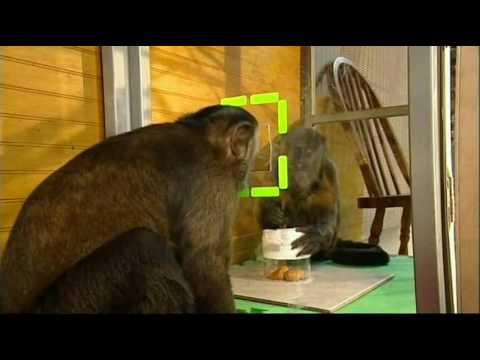 Awesome - Monkeys Use Teamwork To Beat The System