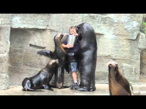Zoo Keeper Gets Kisses And Hugs From Sea Lions
