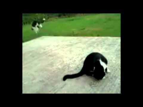 Jokes - Something Scared This Cat