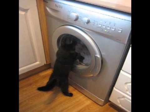 Cute - Cat Plays With The Washing Machine